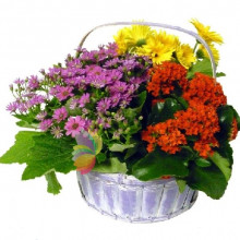 immagine Basket of flowery plants